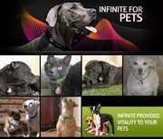 Hologram Pet Tags for better Vitality
